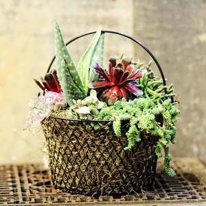 04.19 Succulent Wire Basket Party 1p